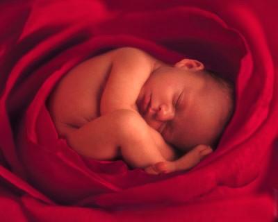 Baby in doek die lijkt op rode roos
